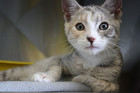 'Willow' is a three-month-old cat who needs a foster home