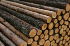 Forestry is a big earner, worth $3 billion to the economy