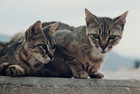 A number of cats are being killed in Dunedin
