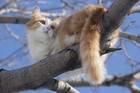 A cat stuck in a tree (file pic)
