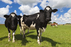 NZ's reliance on dairy exports could backfire