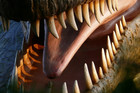 Allosaurus - fearsome look, ate like a bird