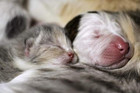 A kitten and Noland, right, snuggle up together (Photo: Cleveland Animal Protective League)