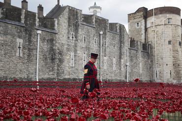 Yeoman Serjeant Bob Loughlin walks amongst the poppies (Reuters)